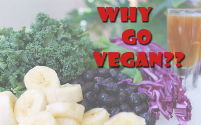 "So Why ""Go"" Vegan? The Answers are Pretty Simple…"